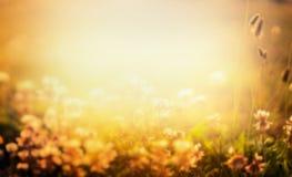 Zamazany natury tło z kwiatami i zmierzch zaświecamy Obraz Stock
