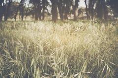 Zamazany natury tło Fotografia Stock