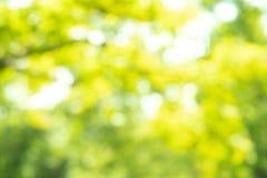 Zamazany park z bokeh światła tłem, natura przy ogródem z fotografia royalty free