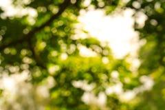 Zamazany park z bokeh światła tłem, natura przy ogródem z zdjęcie stock