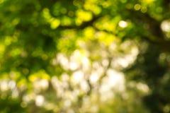 Zamazany park z bokeh światła tłem, natura przy ogródem z zdjęcie royalty free