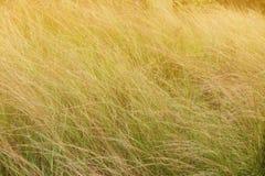 Zamazany tło pomarańczowej trawy pole Zdjęcia Stock