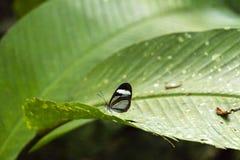 Zamazany tło z motyl żywą sceną w dżunglach, amazonka Rzeczny basen w Ameryka Południowa obraz royalty free