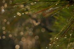 Zamazany tło i bokeh od drzewa fotografia stock