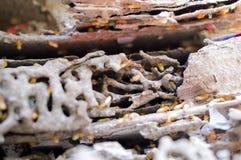 Zamazany - termity uszkadzający książki Obrazy Royalty Free