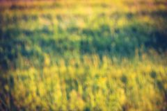 Zamazany trawy t?o Kolor żółty, zieleń, brązów kolory Jaskrawy lato s?oneczny dzie? obrazy royalty free