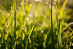 Zamazany widok z miękką ostrością rosa na trawie w plecy świtu świetle słonecznym obrazy royalty free