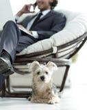 Zamazany wizerunek biznesmena obsiadanie w krześle i jego małym zwierzęciu domowym Fotografia Royalty Free
