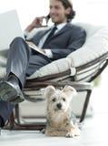 Zamazany wizerunek biznesmena obsiadanie w krześle i jego małym zwierzęciu domowym Obrazy Royalty Free