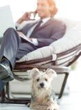 Zamazany wizerunek biznesmena obsiadanie w krześle i jego małym zwierzęciu domowym Obraz Stock