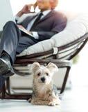 Zamazany wizerunek biznesmena obsiadanie w krześle i jego małym zwierzęciu domowym Zdjęcie Royalty Free