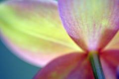 Zamazanych orchidei medytaci abstrakta marzycielski tło Zdjęcie Royalty Free