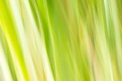zamazujący abstrakcyjne tło Pastel zieleń Obraz Stock