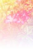 Zamazujący Impala leluja kwitnie kwitnienie w pastelowego koloru stylu dla tła zdjęcie royalty free