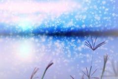 Zamazujący Swallen Palcowa trawa przy zmierzchem z śnieżny spadać Obrazy Stock