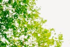 Zamazujący zielona natura zdjęcia stock
