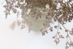 Zamazujący wysuszeni kwiaty w wazie Fotografia Stock