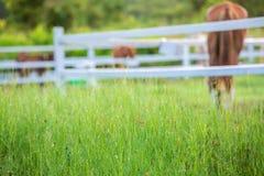 Zamazuje konie w tle i trawy z ranek rosą przy przedpolem, Zielona łąka dla koni z stajenką Obraz Stock
