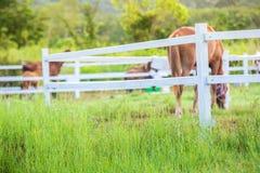 Zamazuje konie w tle i trawy z ranek rosą przy przedpolem, Zielona łąka dla koni z stajenką Zdjęcia Stock