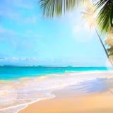 Zamazuje pięknego natury drzewka palmowego na tropikalnej plaży z bokeh słońcem Zdjęcie Stock