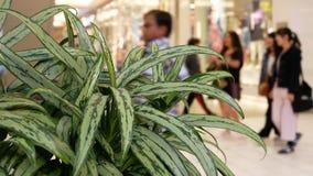 Zamazuje ruch ludzie robi zakupy wśrodku Burnaby zakupy centrum handlowego zbiory wideo