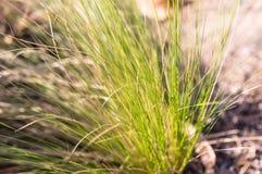 Zamazuje trawy w parku z światłem słonecznym, plama Obrazy Stock