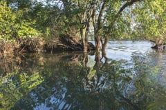 Zambezi river Royalty Free Stock Photos