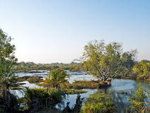 Zambezi Rivier in Zambia Stock Afbeeldingen
