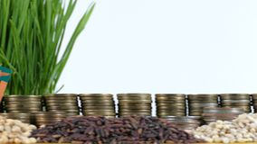 Zambia flag waving with stack of money coins and piles of wheat. And rice seeds stock video