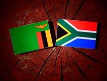 Zambiaanse vlag met Zuidafrikaanse vlag op een geïsoleerde boomstomp vector illustratie