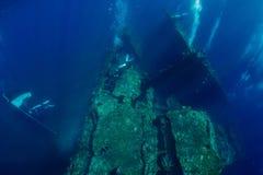Zambullida del hombre de Freediver bajo el agua en el naufragio en Bali imagen de archivo libre de regalías
