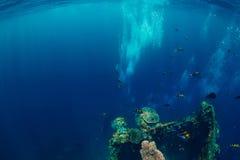 Zambullida del hombre de Freediver bajo el agua en el naufragio en Bali imagen de archivo