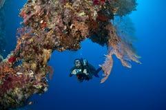 Zambullidor con la cámara a lo largo del filón, Mar Rojo Imagen de archivo libre de regalías