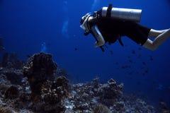 zambullidor Coral Reef fotografía de archivo