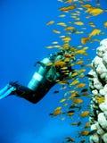 Zambullidor de equipo de submarinismo de la mujer Imágenes de archivo libres de regalías
