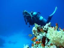 Zambullidor de equipo de submarinismo de la mujer Imagenes de archivo