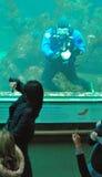 Zambullidor de equipo de submarinismo en el acuario de la bahía de Monterey que limpia II Foto de archivo