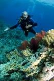 Zambullidor de equipo de submarinismo en el filón coralino fotos de archivo