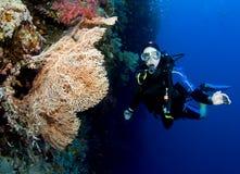 Zambullidor de equipo de submarinismo en zambullida de la pared Foto de archivo