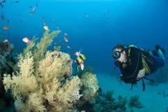 Zambullidor de equipo de submarinismo masculino observando vida de marina. Fotografía de archivo