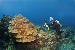 Zambullidor de equipo de submarinismo que fotografía el coral de seta en Hawaii Imágenes de archivo libres de regalías