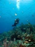 Zambullidor de equipo de submarinismo que mira hacia arriba en el caimán Brac Imagen de archivo libre de regalías