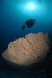 Zambullidor de equipo de submarinismo sobre un coral georgonian gigante del ventilador Foto de archivo