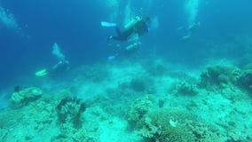 Zambullidor de equipo de submarinismo subacuático metrajes