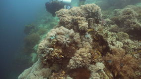 Zambullidor de equipo de submarinismo subacuático almacen de video