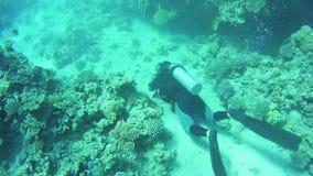 Zambullidor de equipo de submarinismo subacuático Mar Rojo, Egipto metrajes