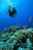Zambullidor de equipo de submarinismo y filón coralino fotos de archivo