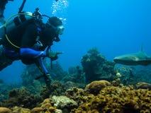 Zambullidor de equipo de submarinismo y tiburón de enfermera fotografía de archivo libre de regalías