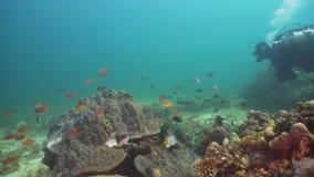 Zambullidor de equipo de submarinismo subacuático Filipinas, Mindoro metrajes