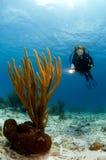 Zambullidor de la mujer que señala la luz en el coral suave del Caribe Imagenes de archivo